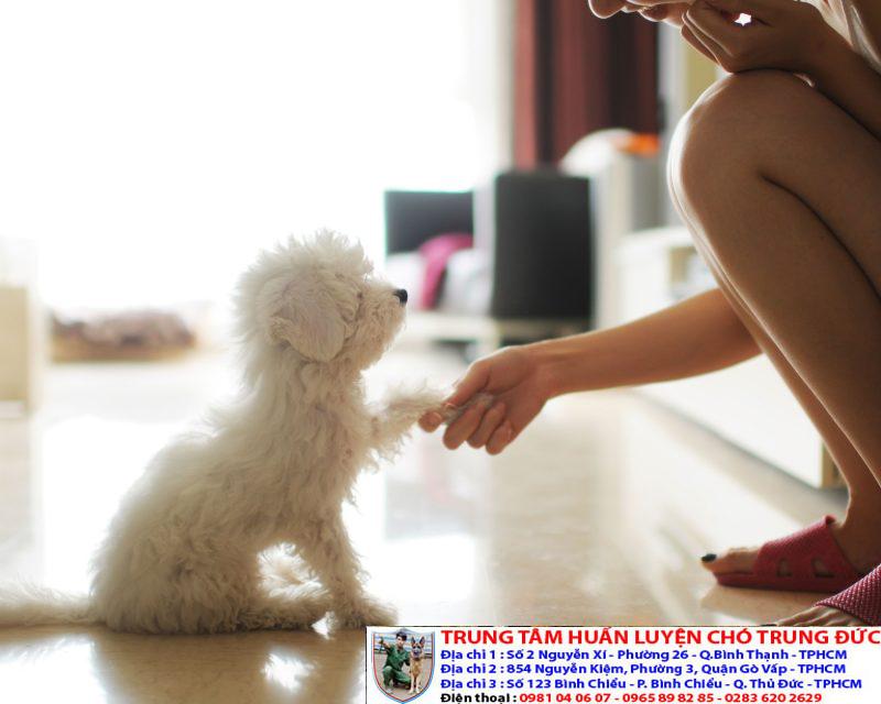 Huấn luyện chó thực hiện các động tác chuyên nghiệp, chuẩn bài
