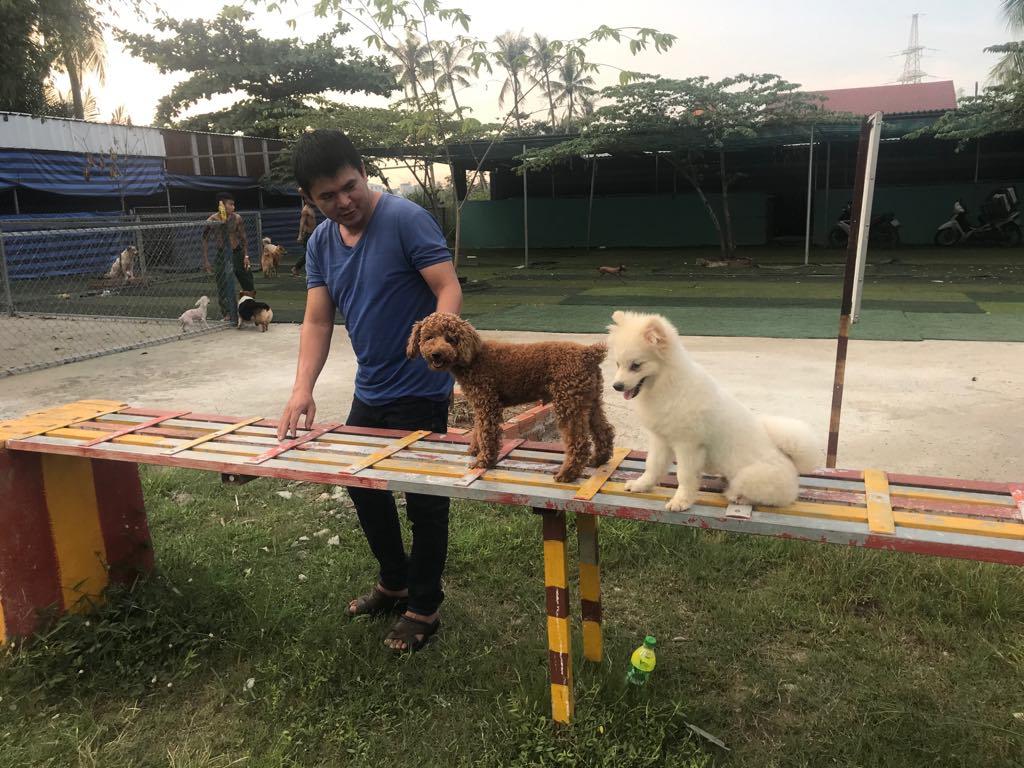 Nhận giữ chó ngày lễ tết - Dịch vụ chuyên nghiệp, uy tín tại Tphcm